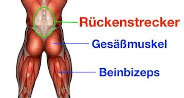 Foto von den Beckenheben Muskeln.