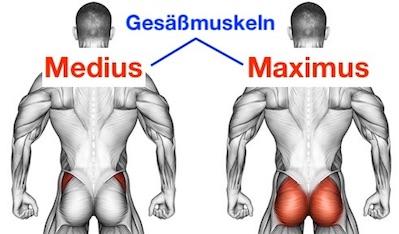 Foto von den Gesäßmuskeln Gluteus maximus und Gluteus medius.