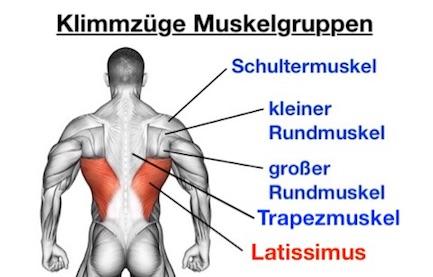 Foto von den Klimmzüge Muskelgruppen.