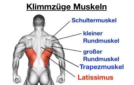 Foto von den Klimmzüge Muskeln.