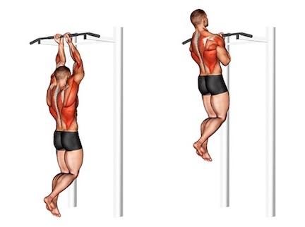 Muskelaufbau Bizeps: Foto von der Übung Klimmzug eng mit Untergriff.