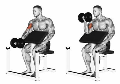 Muskelaufbau Bizeps: Foto von der Übung Scottcurls mit Kurzhantel.