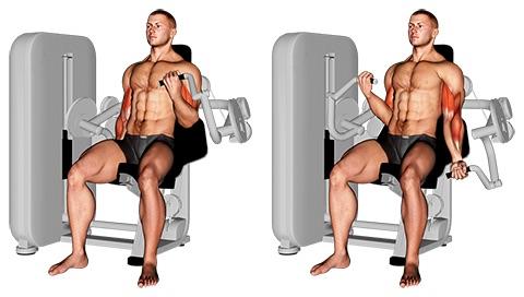 Muskelaufbau Oberarme: Foto von der Übung Bizeps Curls Maschine.