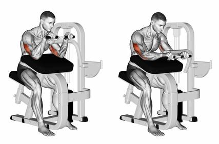Muskelaufbau Oberarme: Foto von der Übung Trizepsdrücken Maschine.