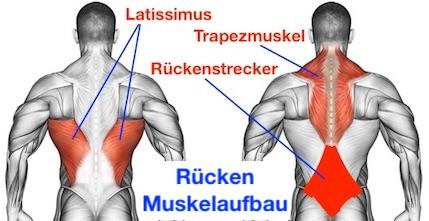 Foto von dem Rücken Muskelaufbau.
