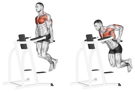 Untere Brustmuskeln trainieren: Foto von der ÜbungBrust Dips am Gerät.