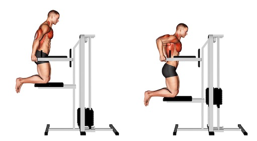 Untere Brustmuskeln trainieren: Foto von der ÜbungBrust Dips Maschine.