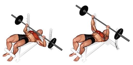 Untere Brustmuskeln trainieren: Foto von der ÜbungLanghantelBankdrücken Negativbank.