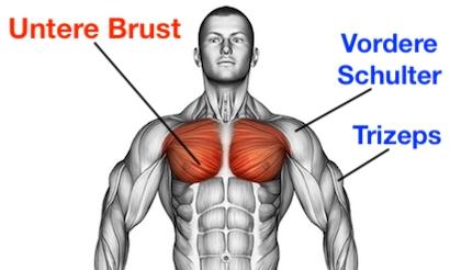 Foto vom untere Brustmuskeln trainieren.