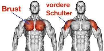 Foto von den Brust Kabelzug Muskeln namens großer Brustmuskel und vordere Schultermuskeln.