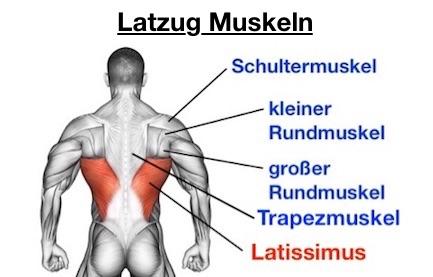 Foto von den Latzug Muskeln.