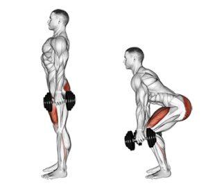 Oberschenkel trainieren zu Hause: Foto von der Übung Kniebeuge mitKurzhanteln.