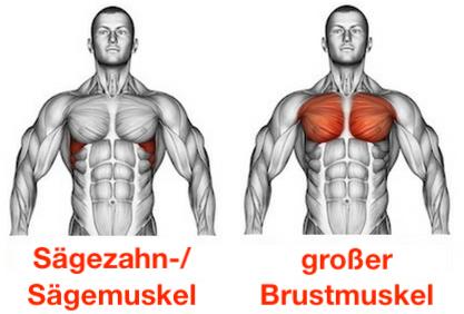 Foto von dem Sägezahnmuskeln / vorderer Sägemuskel und großer Brustmuskel.