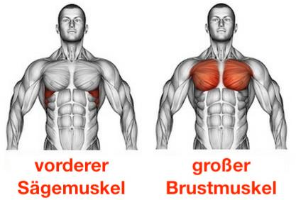 Foto von den Muskeln vorderer Sägemuskel und großer Brustmuskel.