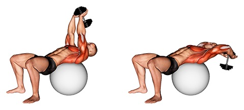 Vorderer Sägemuskel trainieren: Foto von der ÜbungÜberzüge Kurzhantel Gymnastikball.