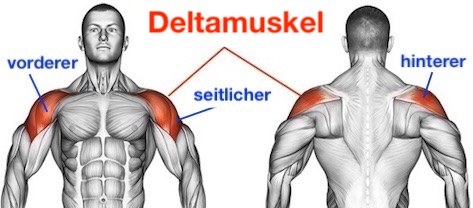 Foto vom vorderen, seitlichen und hinteren Deltamuskel.