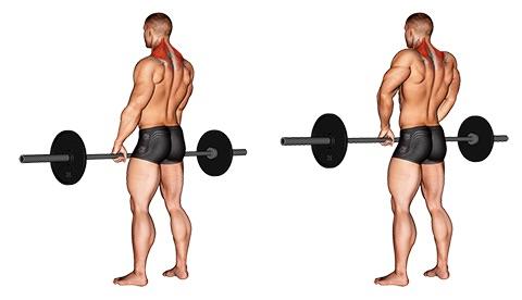 Die besten Nackenübungen für zuhause: Foto von der Übung Langhantel Shrugs.