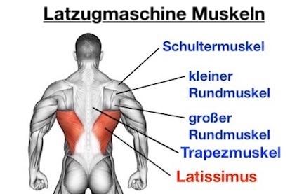 Foto von den Latzugmaschine Muskeln.