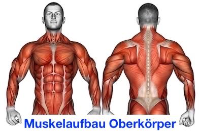 Foto vom Muskelaufbau Oberkörper.