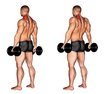 Nacken Übungen Muskelaufbau:Foto von der Übung Nackenziehen Kurzhantel stehend.