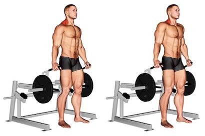 Nackenübungen Bodybuilding:Foto von der Übung Nackenheben Maschine.