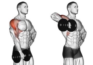 Schulter Nacken Übungen Muskelaufbau: Foto von der Übung AufrechtesRudern mitKurzhantel.