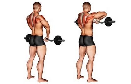 Schulter Nacken Übungen Muskelaufbau: Foto von der Übung AufrechtesRudern mit SZ Hantel.
