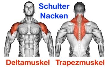 Foto von den Schulter Nacken Muskeln namens Deltamuskel und Trapezmuskel.