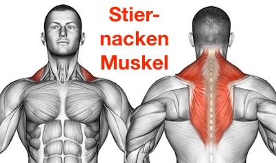 Foto von dem Stiernacken Muskel namens Trapezmuskel.