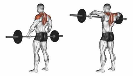 Übungen für den Nacken: Foto von der Übung LanghantelRudern aufrecht.