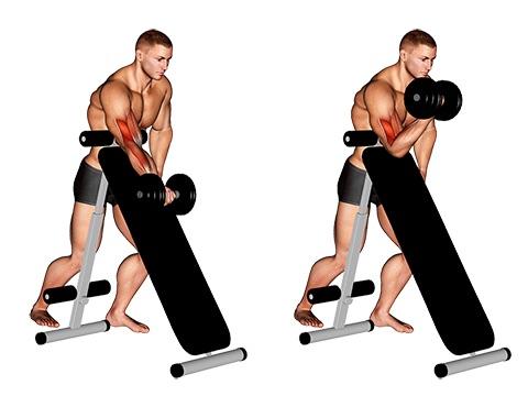 Bizeps Übungen Fitnessstudio: Foto von der Übung ScottcurlsKurzhantel stehend.