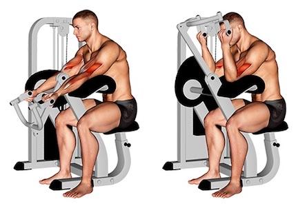 Bizeps Übungen Fitnessstudio: Foto von der Übung ScottcurlsMaschine.