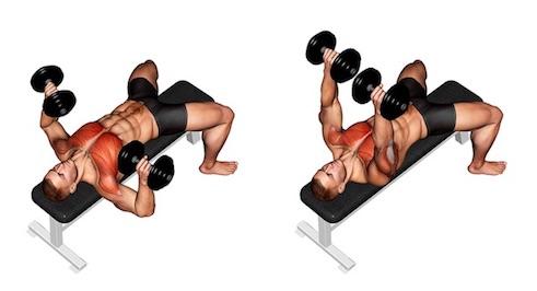 Brustübungen Fitnessstudio: Foto von der Übung Bankdrücken mitKurzhanteln.