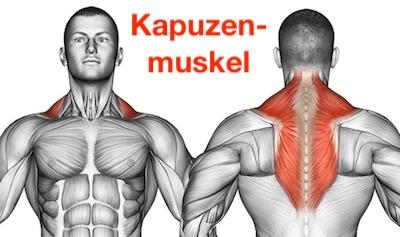 Foto von dem Kapuzenmuskel / Trapezmuskel namens Musculus trapezius.