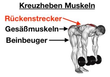 Foto von den Kurzhantel Kreuzheben Muskeln.