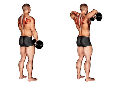 Trapezmuskel trainieren:Foto von der Übung Rudern aufrecht mitKurzhanteln.