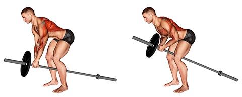 Trapezmuskel trainieren:Foto von der Übung T HantelRudern.