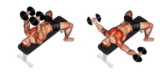 Brustmuskeln trainieren mit Hanteln: Foto von der Übung Kurzhantel Fliegende.