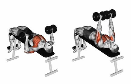 Brustmuskeln trainieren mit Hanteln: Foto von der Übung Kurzhantel negativBankdrücken.