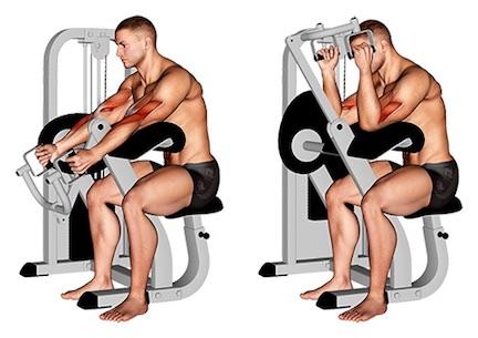 Foto von der Übung Hammer Curls sitzendScottbank Maschine.