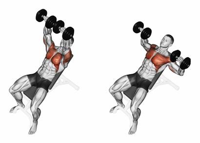 Kurzhantel Übungen Brust:Foto von der Übung Bankdrücken schräg.