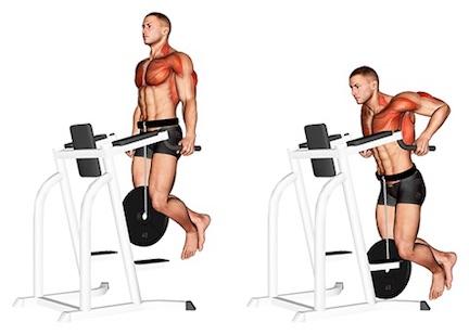 Trizeps Übungen Fitnessstudio: Foto von der Übung Dips fürFortgeschrittene.