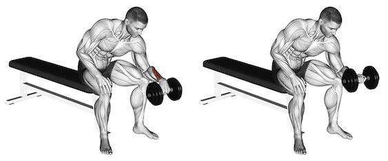 Unterarm trainieren ohne Geräte:Foto von der Übung Unterarm CurlsKurzhantelObergriff.