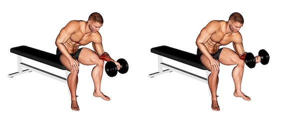 Unterarm trainieren ohne Geräte:Foto von der Übung Unterarm CurlsKurzhantelUntergriff.