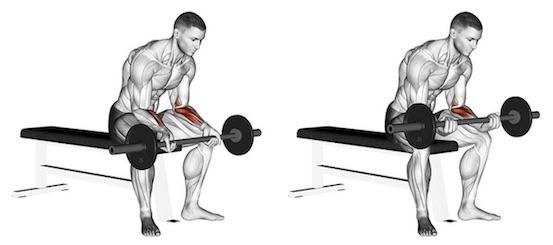 Unterarm trainieren ohne Geräte:Foto von der Übung Unterarm CurlsLanghantel Untergriff.