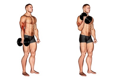 Bizeps Training ohne Hilfsmittel: Foto von der Übung KurzhantelHammercurleinarmig.