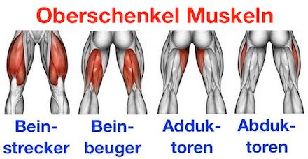 Foto von den Oberschenkel Muskeln Beinstrecker, Beinbeuger, Adduktoren und Abduktoren.