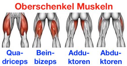 Foto von den Oberschenkel Muskeln Quadriceps, Beinbizeps, Adduktoren und Abduktoren.