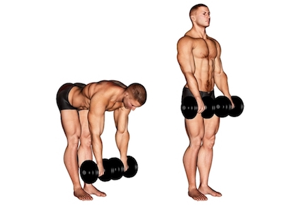 Übungen für den Rücken ohne Geräte:Foto von der Übung Kreuzheben mitKurzhanteln.