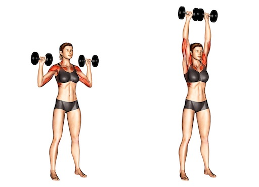 Hanteltraining Frauen PDF: Foto von der Übung Schulterdrücken.